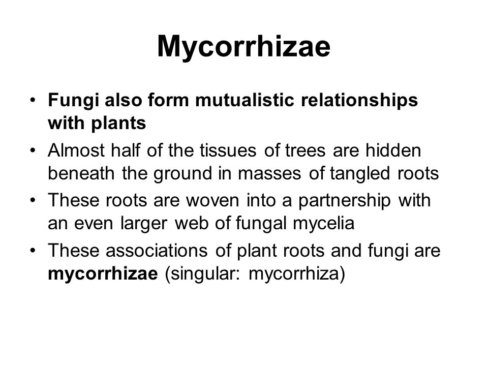 Mycorrhizae Fungi also form mutualistic relationships with plants