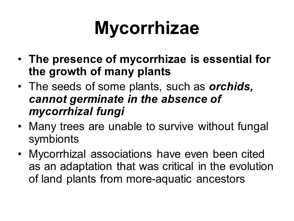 Mycorrhizae The presence of mycorrhizae is essential for the growth of many plants.