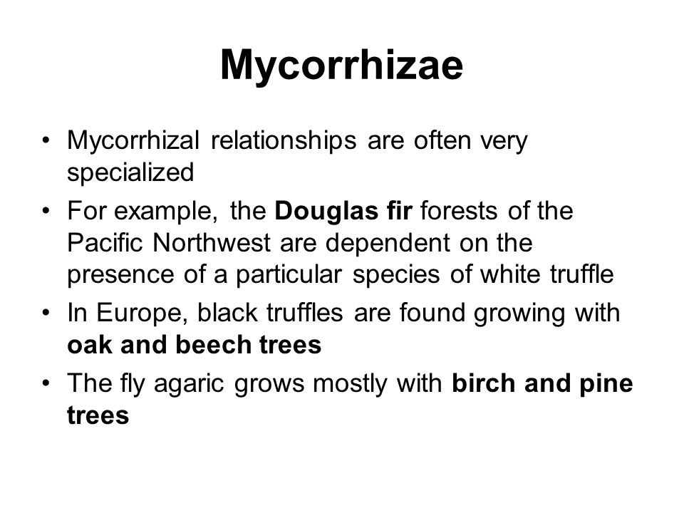 Mycorrhizae Mycorrhizal relationships are often very specialized