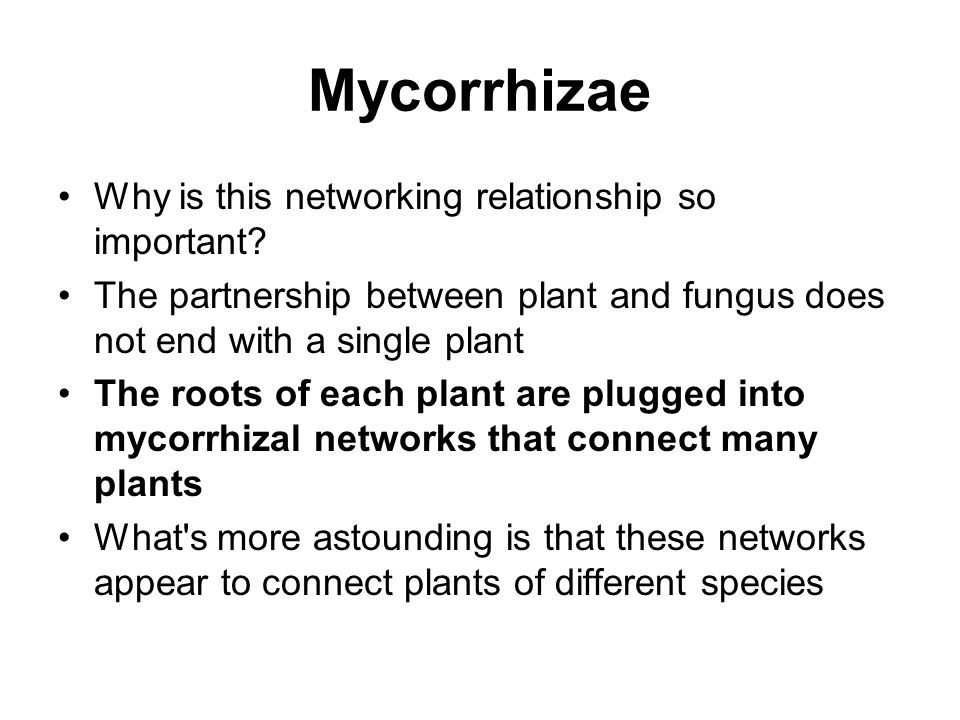 Mycorrhizae Why is this networking relationship so important