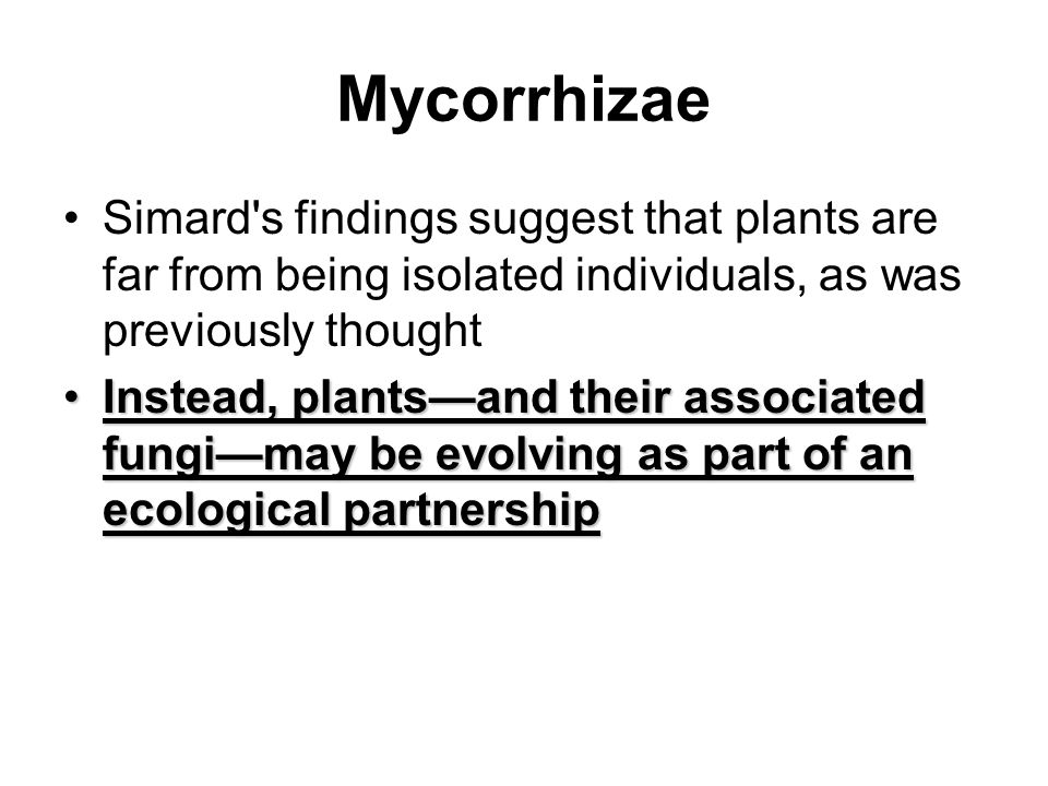 Mycorrhizae Simard s findings suggest that plants are far from being isolated individuals, as was previously thought.