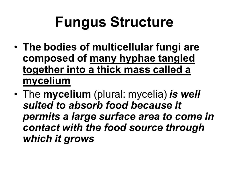 Fungus Structure The bodies of multicellular fungi are composed of many hyphae tangled together into a thick mass called a mycelium.