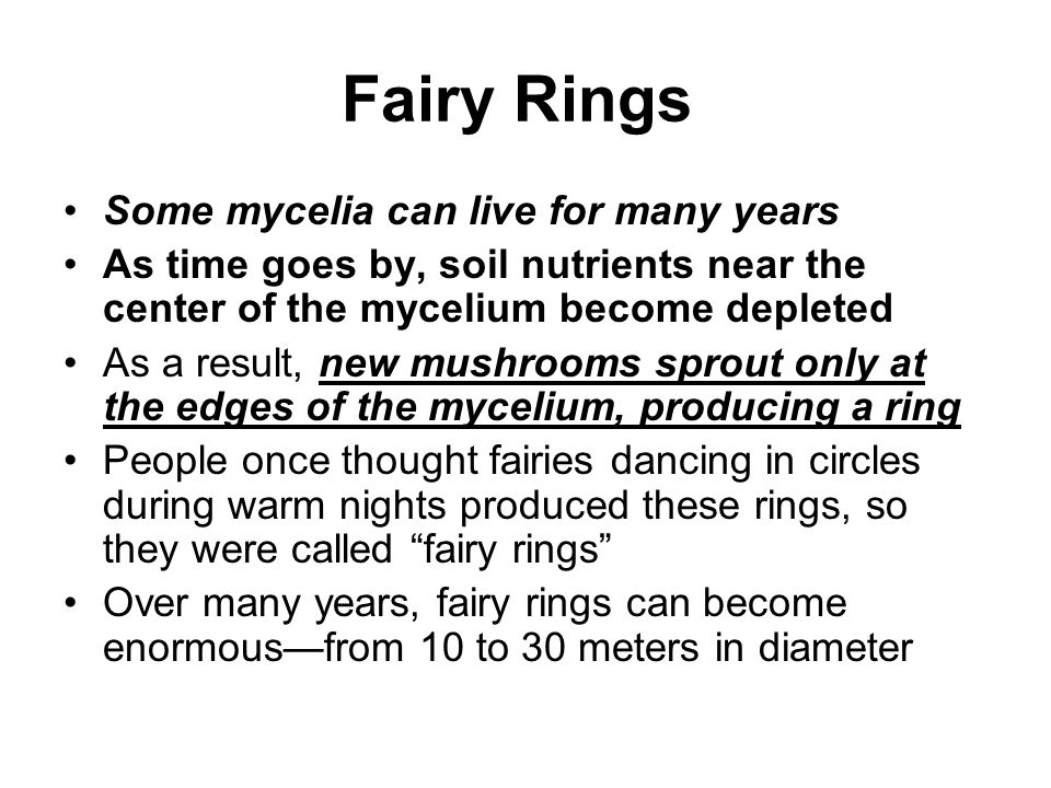 Fairy Rings Some mycelia can live for many years