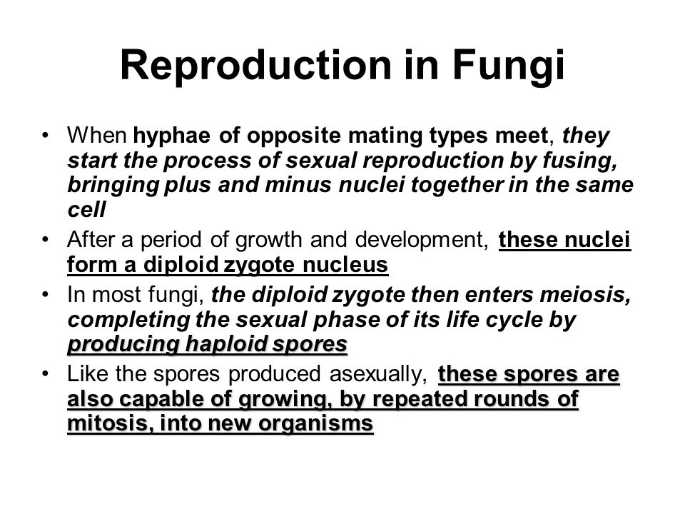 Reproduction in Fungi