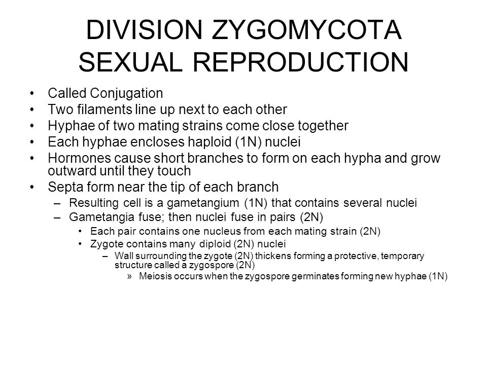 DIVISION ZYGOMYCOTA SEXUAL REPRODUCTION