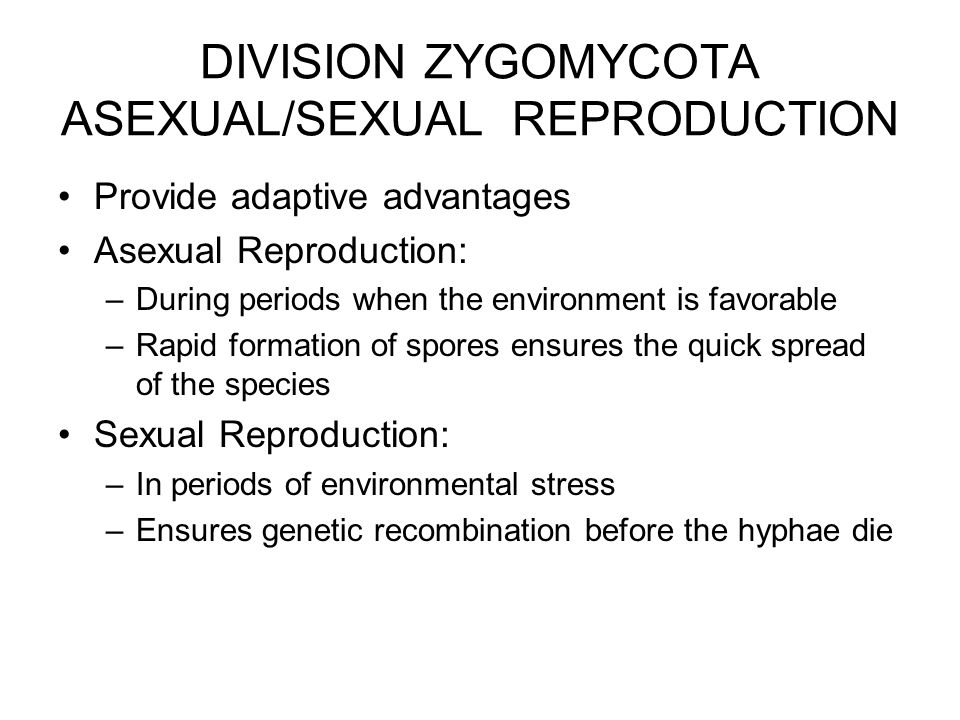 DIVISION ZYGOMYCOTA ASEXUAL/SEXUAL REPRODUCTION