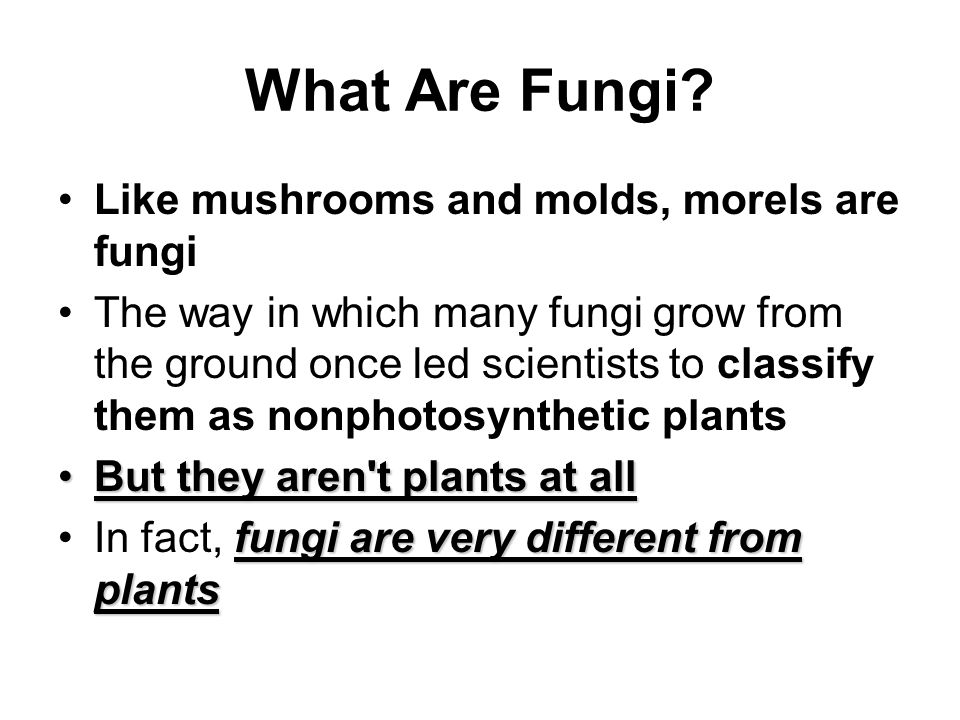 What Are Fungi Like mushrooms and molds, morels are fungi