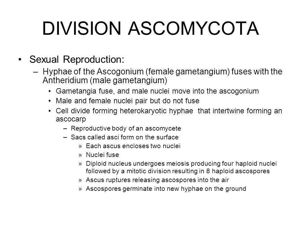 DIVISION ASCOMYCOTA Sexual Reproduction: