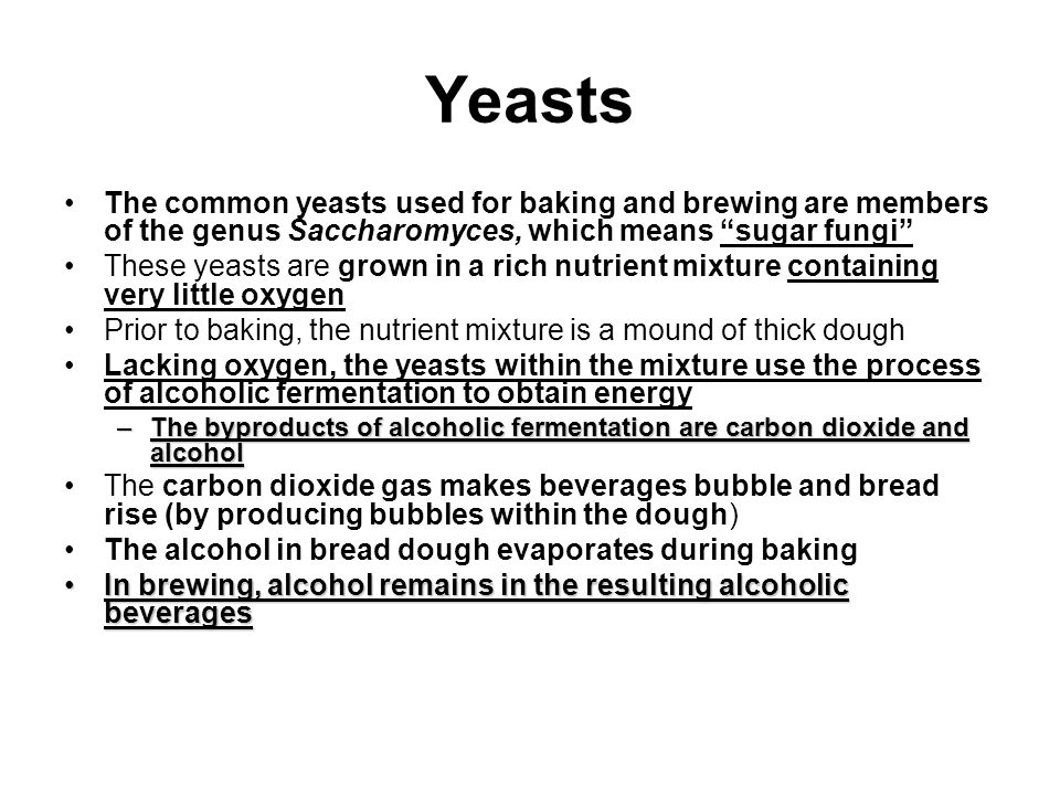 Yeasts The common yeasts used for baking and brewing are members of the genus Saccharomyces, which means sugar fungi