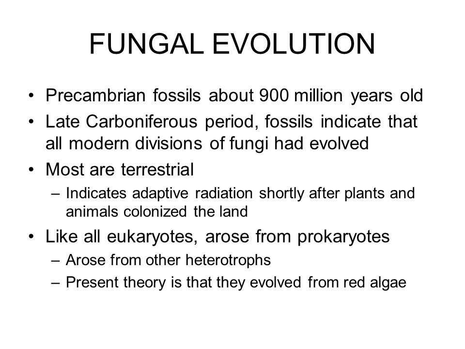 FUNGAL EVOLUTION Precambrian fossils about 900 million years old