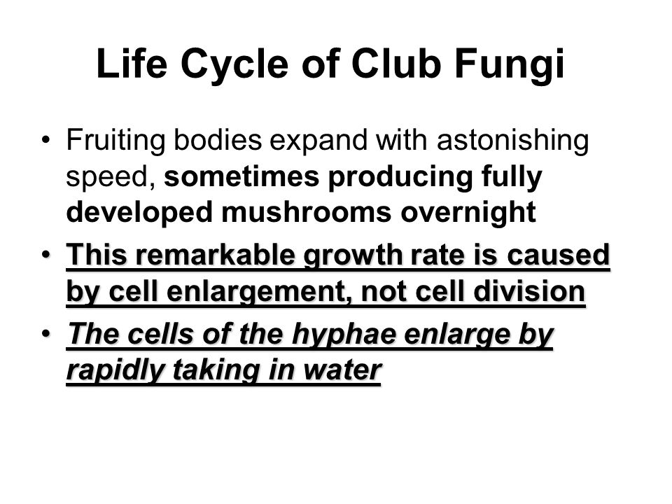 Life Cycle of Club Fungi