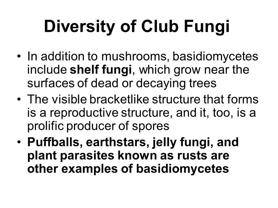 Diversity of Club Fungi