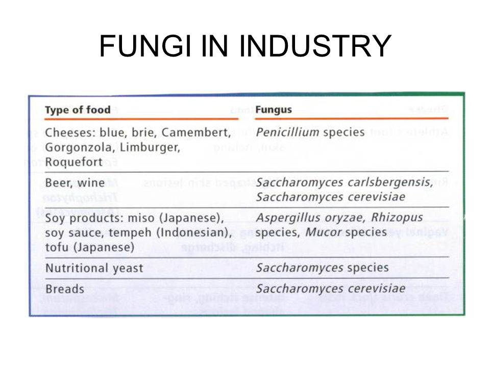 FUNGI IN INDUSTRY