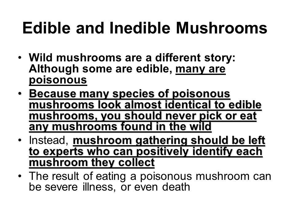 Edible and Inedible Mushrooms