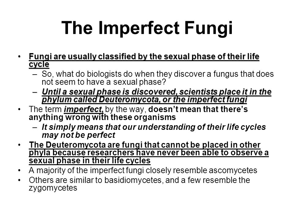 The Imperfect Fungi Fungi are usually classified by the sexual phase of their life cycle.
