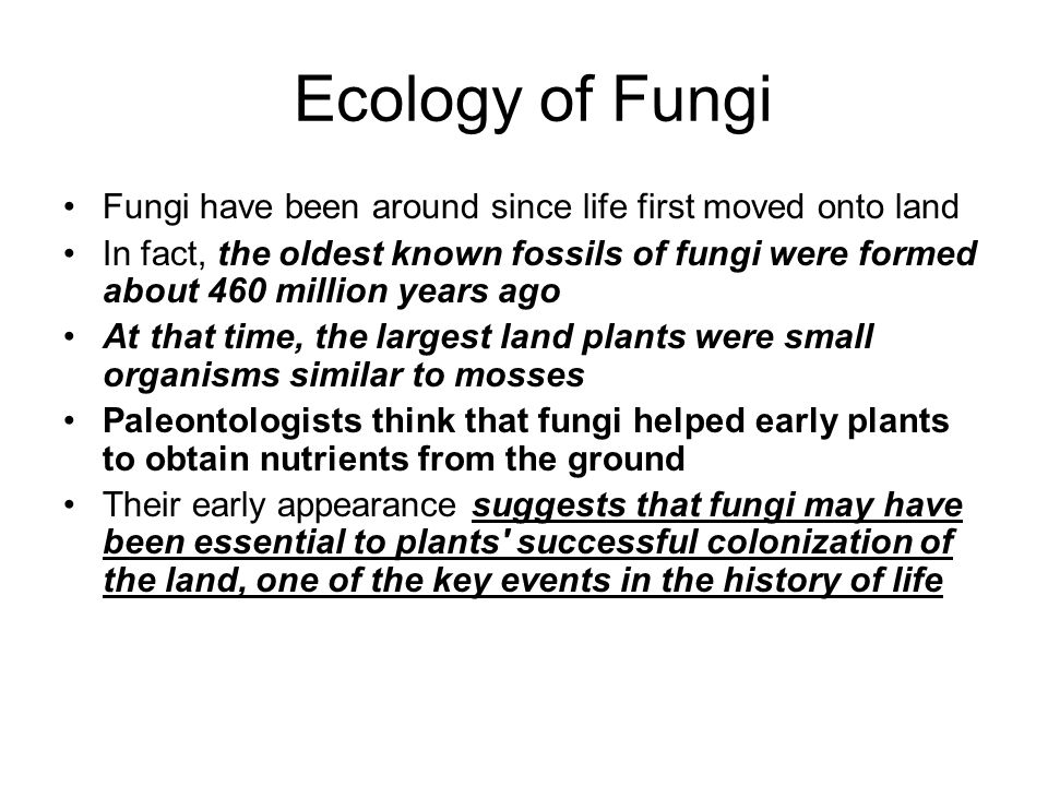 Ecology of Fungi Fungi have been around since life first moved onto land.