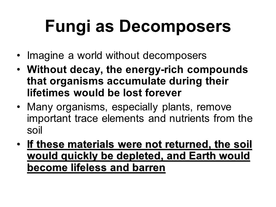 Fungi as Decomposers Imagine a world without decomposers