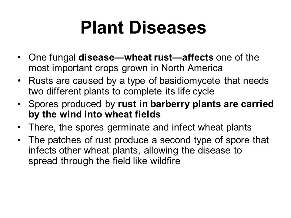 Plant Diseases One fungal disease—wheat rust—affects one of the most important crops grown in North America.