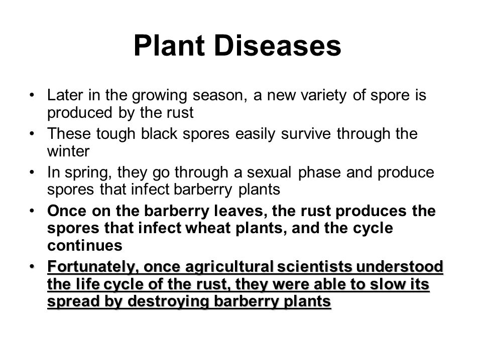 Plant Diseases Later in the growing season, a new variety of spore is produced by the rust.