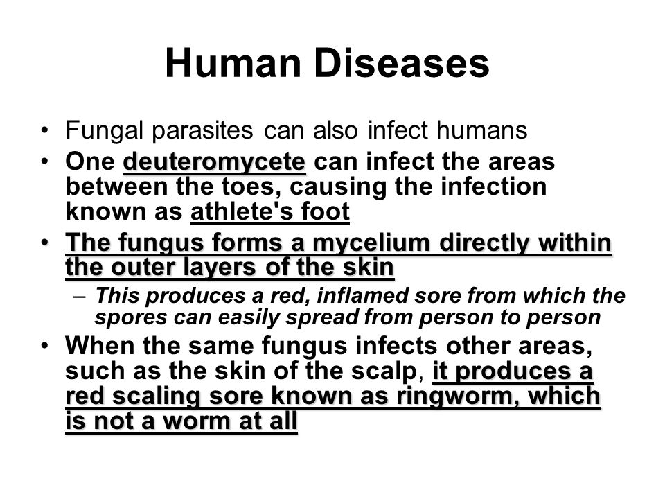 Human Diseases Fungal parasites can also infect humans