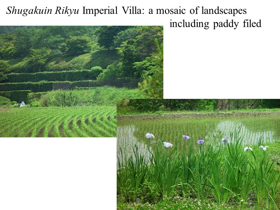 Shugakuin Rikyu Imperial Villa: a mosaic of landscapes