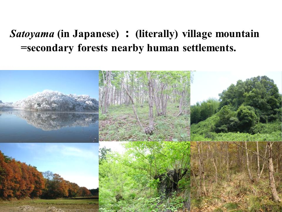 Satoyama (in Japanese) : (literally) village mountain =secondary forests nearby human settlements.