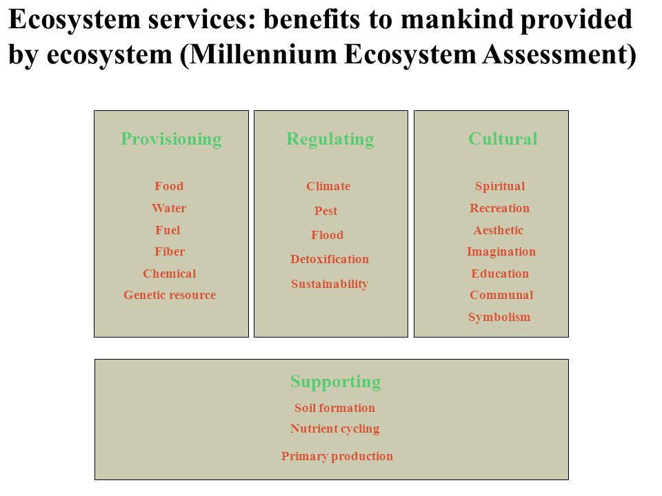 Ecosystem services: benefits to mankind provided by ecosystem (Millennium Ecosystem Assessment)