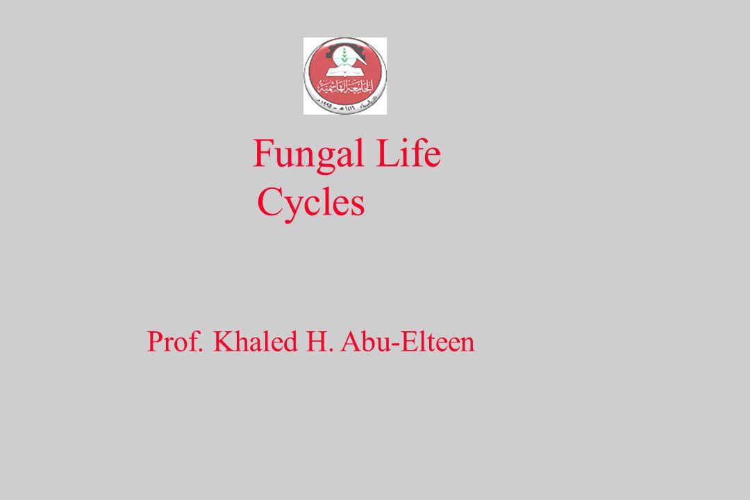 Prof. Khaled H. Abu-Elteen