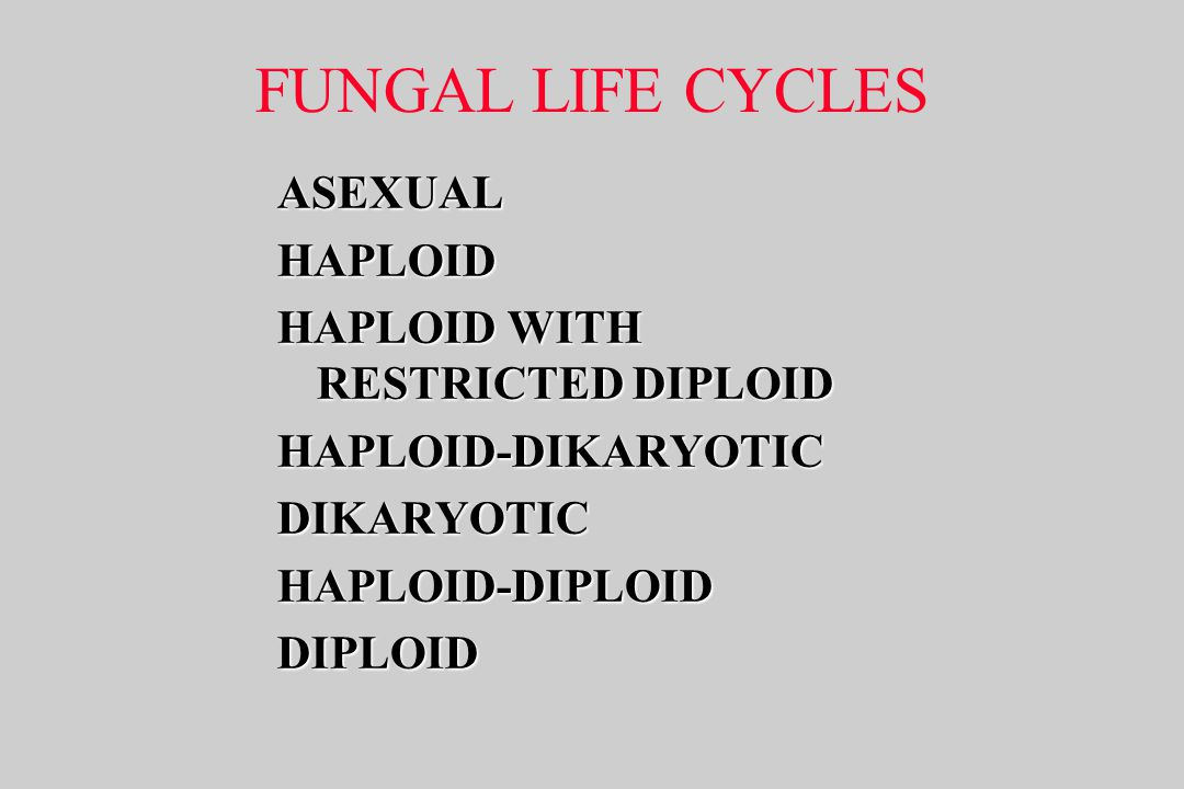 FUNGAL LIFE CYCLES ASEXUAL HAPLOID HAPLOID WITH RESTRICTED DIPLOID