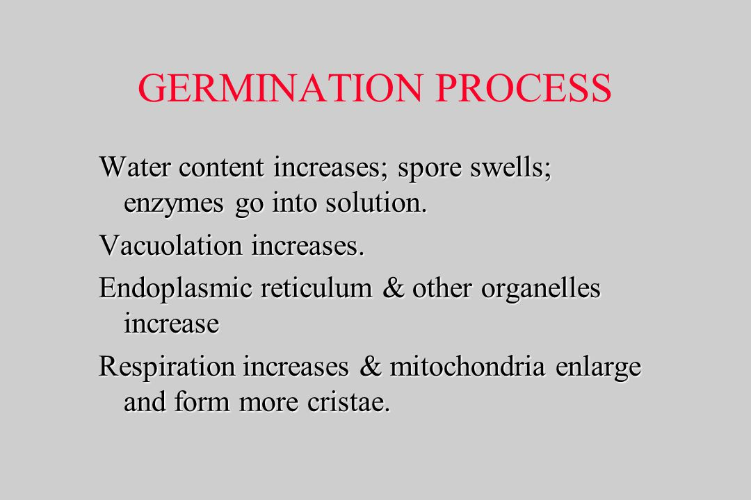 GERMINATION PROCESS Water content increases; spore swells; enzymes go into solution. Vacuolation increases.