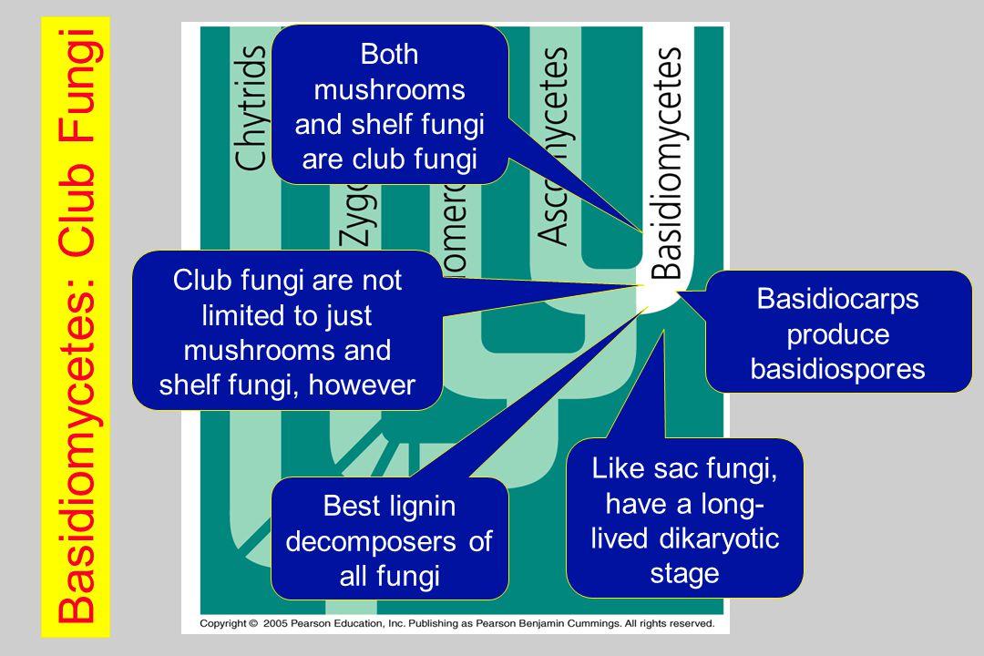 Basidiomycetes: Club Fungi