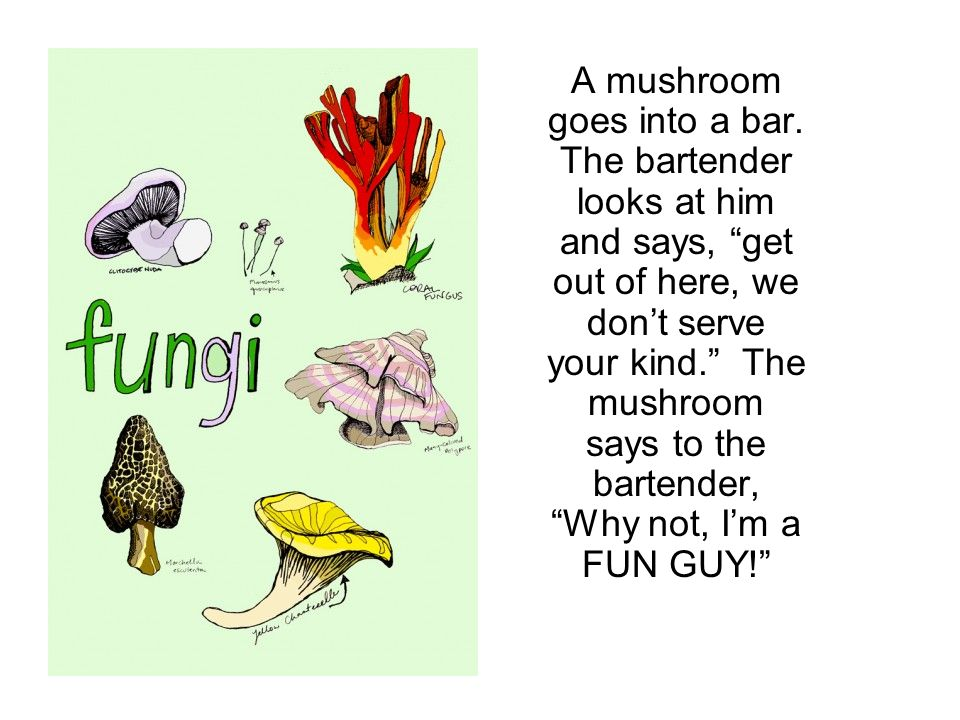 A mushroom goes into a bar