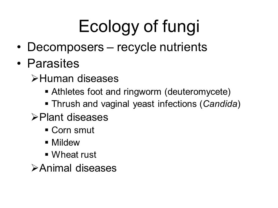 Ecology of fungi Decomposers – recycle nutrients Parasites