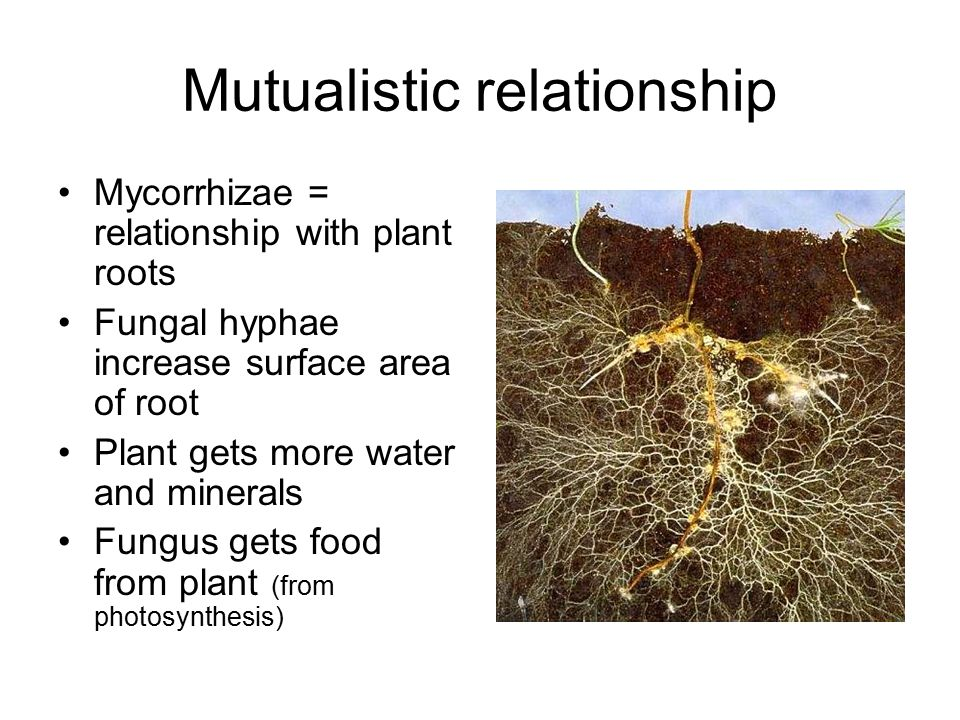 mutualistic relationship of plants and mycorrhizae for