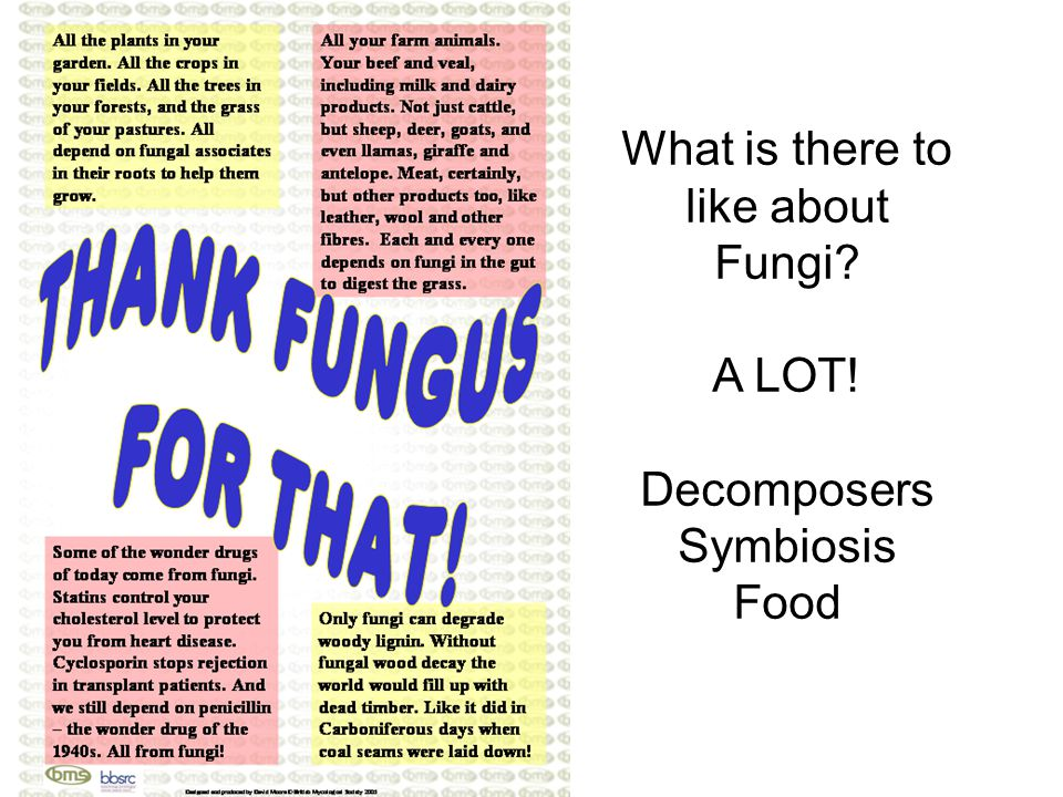 What is there to like about Fungi