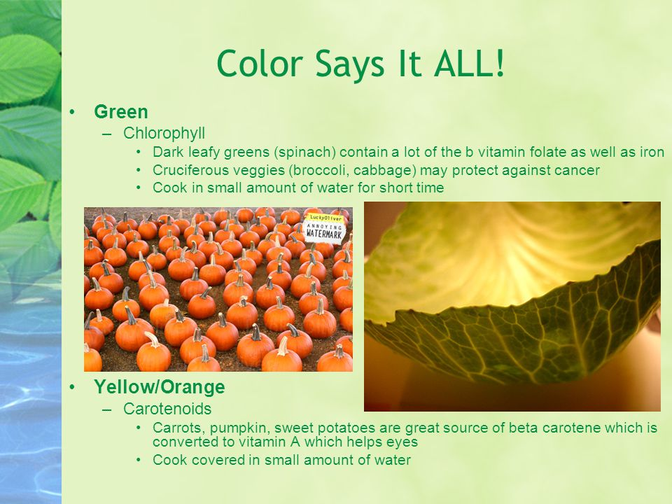 Color Says It ALL! Green Yellow/Orange Chlorophyll Carotenoids