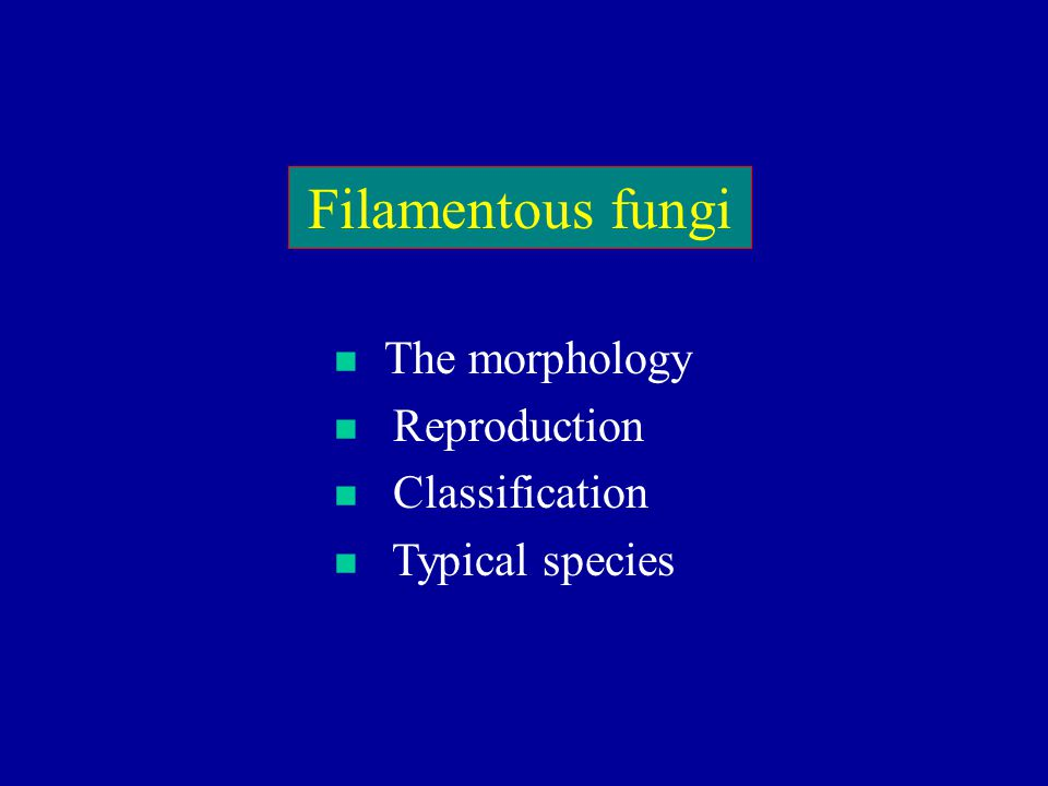 Filamentous fungi The morphology Reproduction Classification