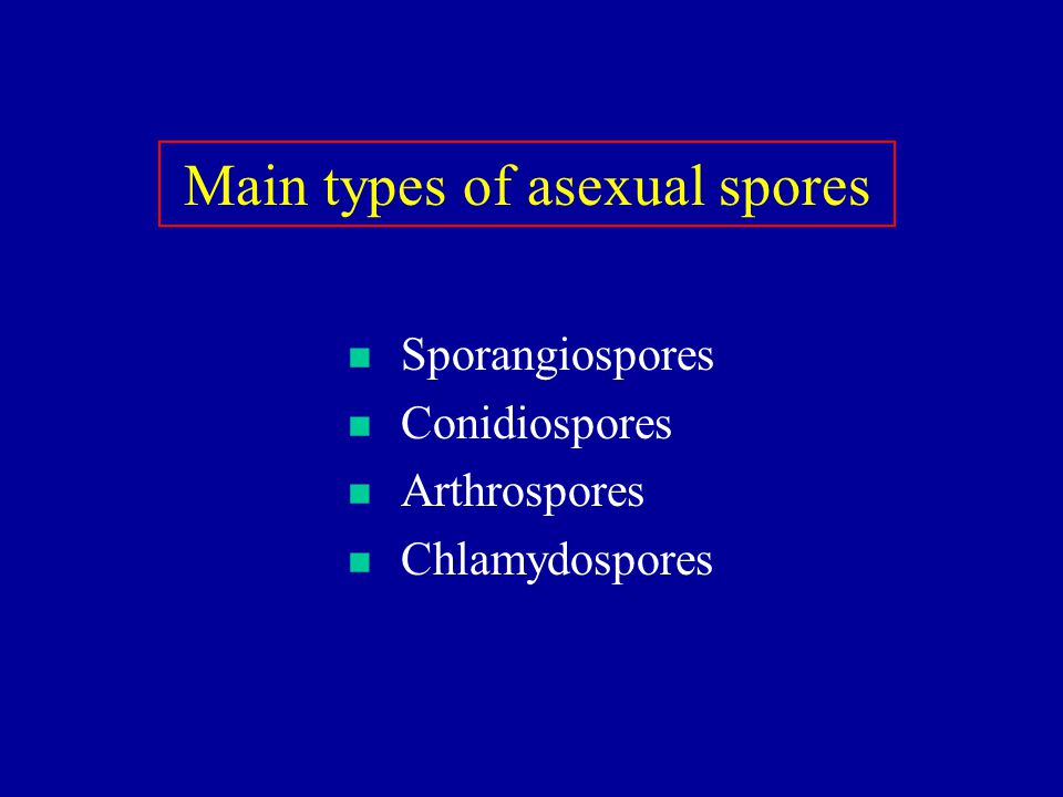 Main types of asexual spores