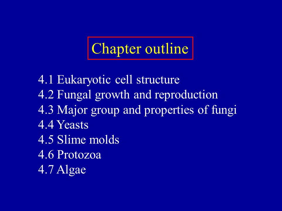 Chapter outline 4.1 Eukaryotic cell structure