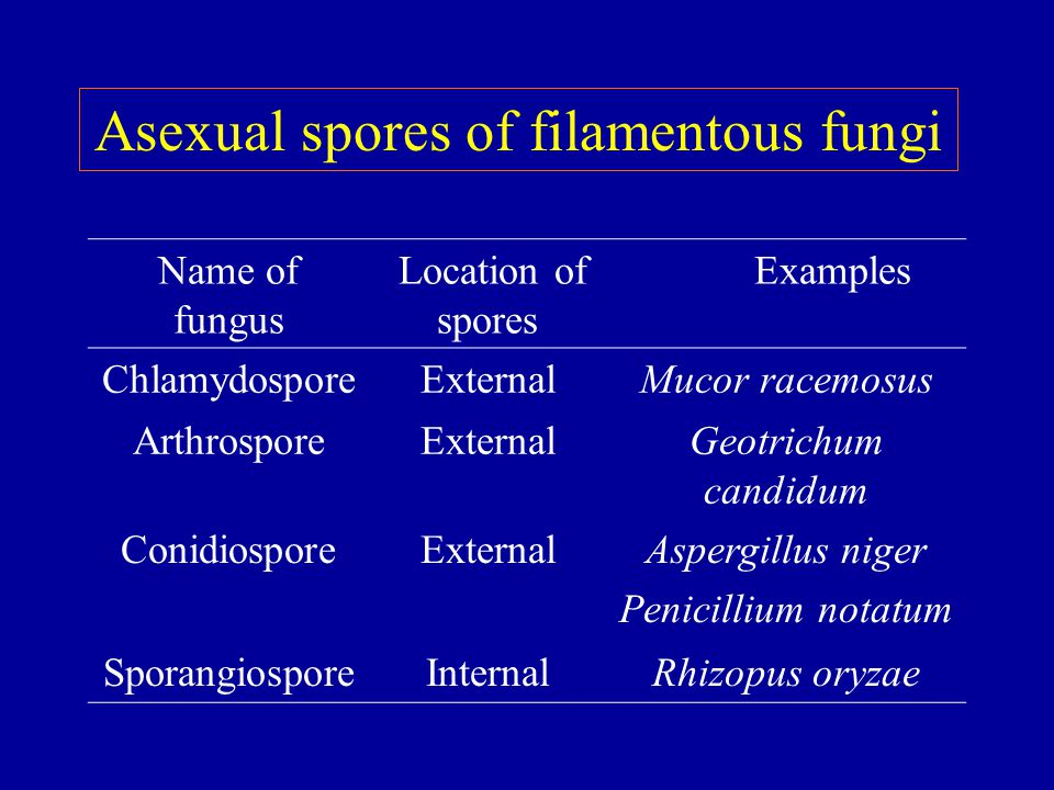 Asexual spores of filamentous fungi