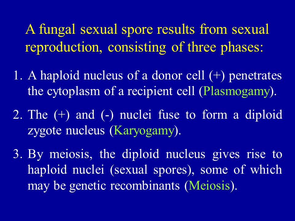 A fungal sexual spore results from sexual reproduction, consisting of three phases: