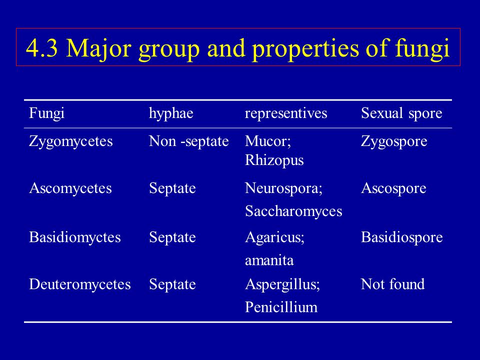 4.3 Major group and properties of fungi