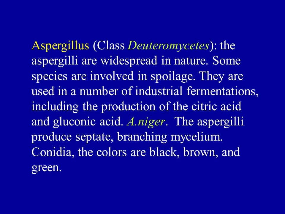 Aspergillus (Class Deuteromycetes): the aspergilli are widespread in nature.