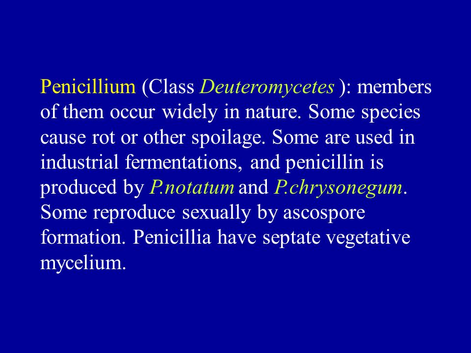 Penicillium (Class Deuteromycetes ): members of them occur widely in nature.