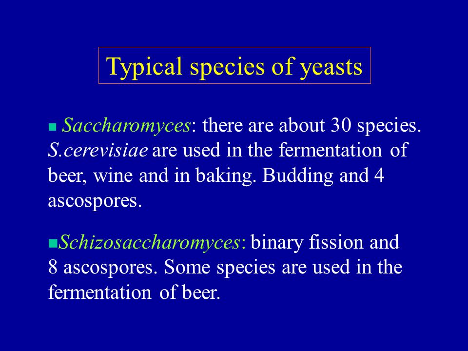 Typical species of yeasts