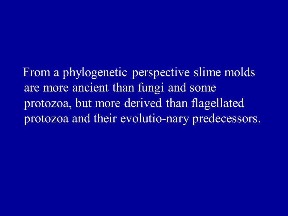 From a phylogenetic perspective slime molds are more ancient than fungi and some protozoa, but more derived than flagellated protozoa and their evolutio-nary predecessors.