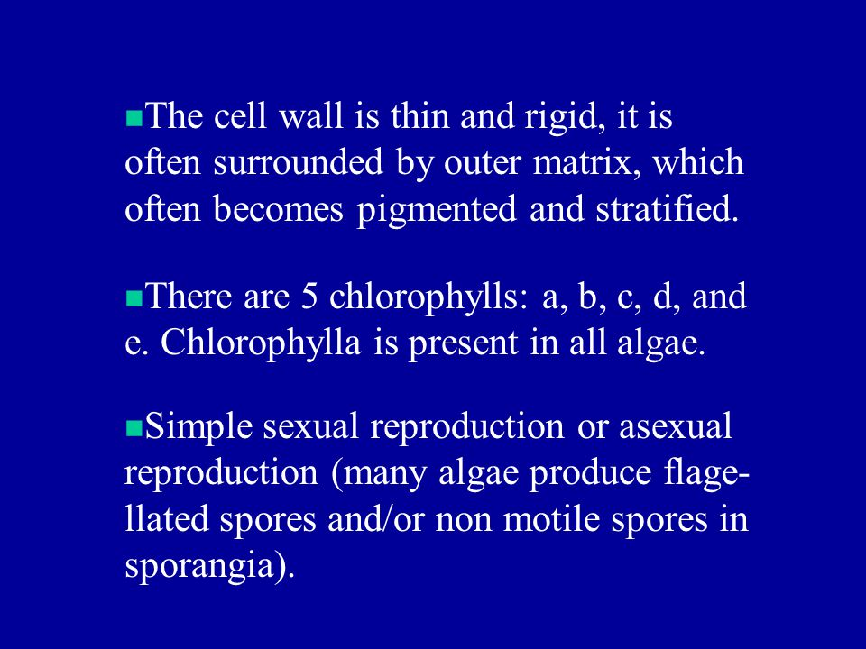 The cell wall is thin and rigid, it is often surrounded by outer matrix, which often becomes pigmented and stratified.