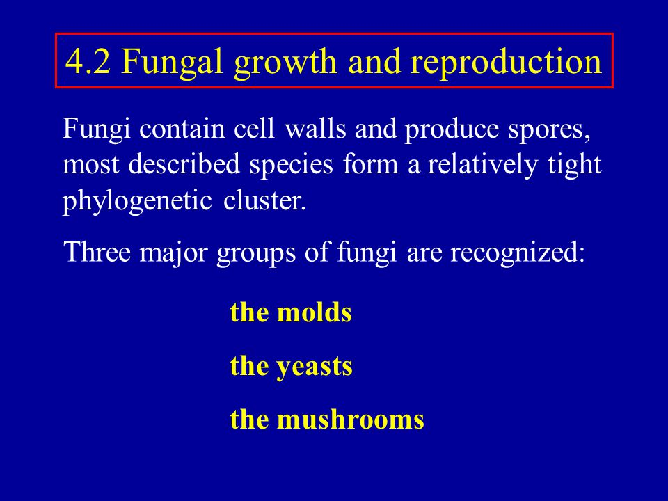4.2 Fungal growth and reproduction