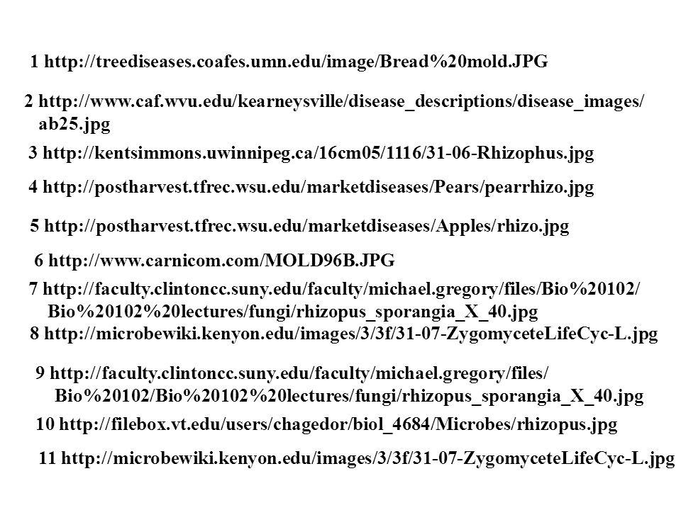 1 http://treediseases.coafes.umn.edu/image/Bread%20mold.JPG