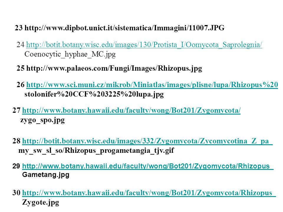 23 http://www.dipbot.unict.it/sistematica/Immagini/11007.JPG